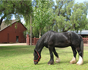 Barns Area with horse